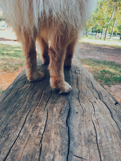 Pet Portraits Animal Leg Animal Themes Close-up Day Domestic Animals Mammal Nature No People One Animal Outdoors Pets Tree Wood - Material