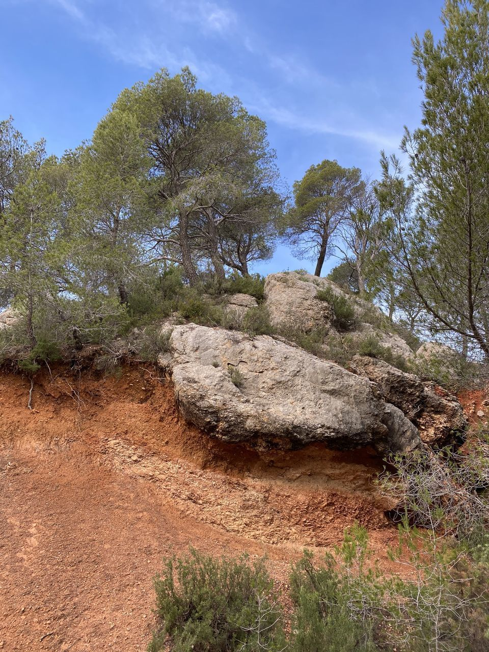 tree, plant, land, growth, nature, sky, rock, no people, tranquility, environment, non-urban scene, landscape, tranquil scene, beauty in nature, rock - object, solid, day, outdoors, scenics - nature, forest, sandstone
