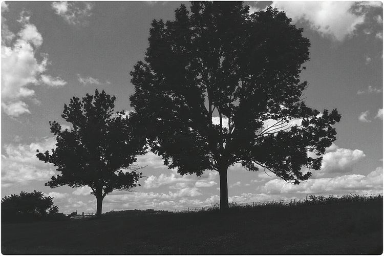 Tree Taking Photos Black & White Sky & Clouds Landscape Black And White Bw_collection Blackandwhite Black&white Shades Of Grey