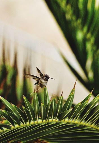 Close-up of bird on leaf