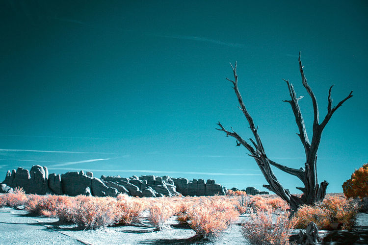 Bare trees by plants against blue sky
