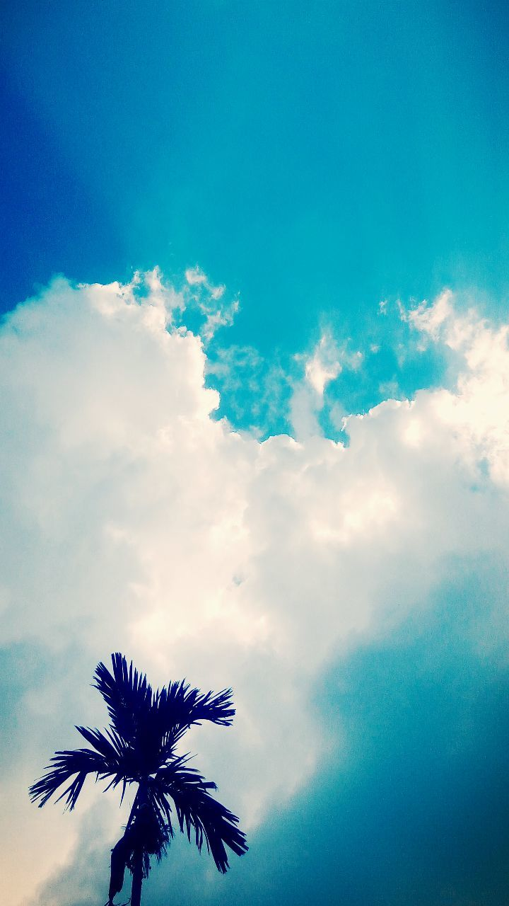 cloud - sky, sky, low angle view, beauty in nature, nature, outdoors, scenics, tranquility, day, no people, blue, palm tree, tree