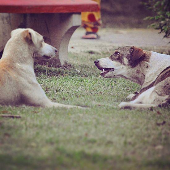 Cardekho Gagans_photography Rocky Seeking Response Bosco