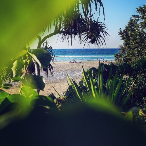 Showing Imperfection Beach Sea Shore Sand Leaves Ocean Kirra Gold Coast Queensland Australia Afternoon Summer