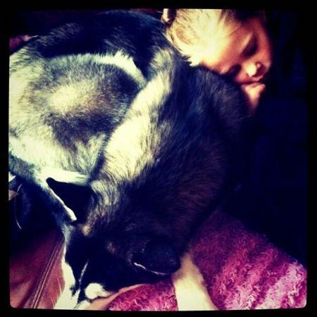 Husky ♡ Sleeping Girl Family ❤