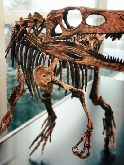 EyeEm Selects Sea Horse Sea Life Water Science Close-up Animal Themes Animal Bone Animal Skull Animal Skeleton Extinct Paleontology Fossil Dinosaur Octopus Prehistoric Era Animal Teeth Toy Animal The End Death Skeleton Animal Track Limestone Crocodile Snarling Bone  Mollusk Evolution  Roaring Tentacle