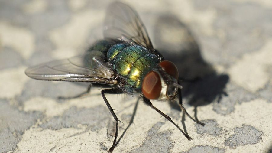 Close-up of fly on floor