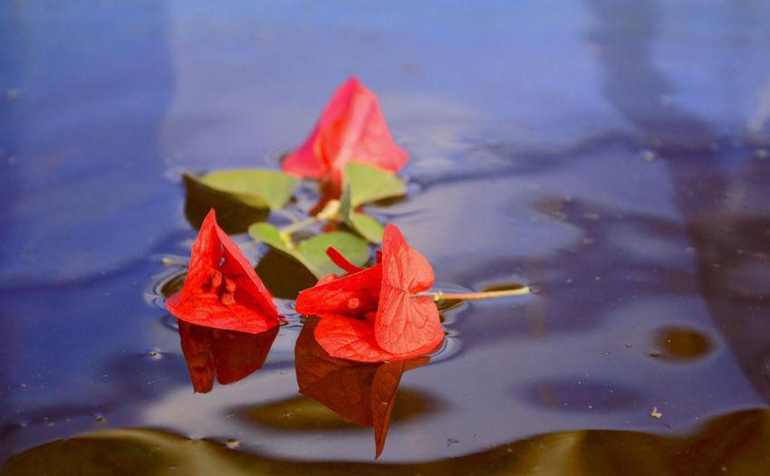 Flowers on