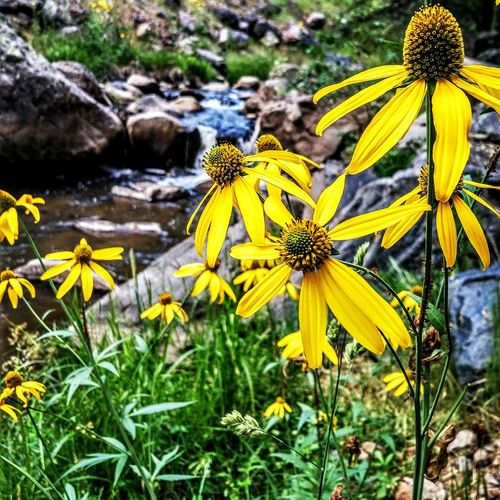 """Et Lux in tenebris lucet. """"And light shines in the darkness."""" Flower Photography In Bloom Jemez New Mexico Vibrant Color Backgrounds Blackberry Priv Tranquility Nature New Mexico Beauty"""