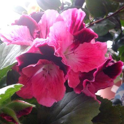 #beautiful #floweroftheday #summer #plants #flower #love #petals #blooms #insta_pick_blossom #flowers #flowerstagram #flowerstyles_gf #flowerporn #florals #appitme #flowerslovers #bloom #petal #botanical #floral #blossom #botanical #sopretty #instablooms Summer Beautiful