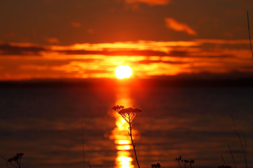 Beauty In Nature Cloud - Sky Nature No People Orange Color Outdoors Reflection Scenics Sea Silhouette Sky Sun Sunlight Sunset Tranquil Scene Tranquility Yellow