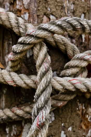 Close-up of ropes wrapped on tree trunk