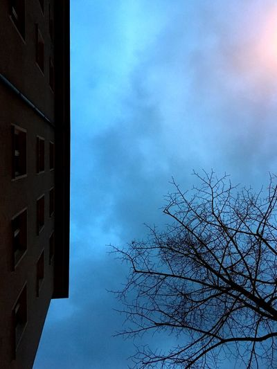 Winterlicht Blue Hour Evening Sky Urban Concept Photography Construction Special Light Sky Cloud - Sky Tree Nature Architecture Building Exterior Low Angle View Built Structure No People Bare Tree Blue Outdoors Tranquility