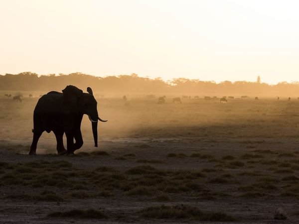 Silhouette. Elephant Animals Against The Light Africa Kenya Amboseli