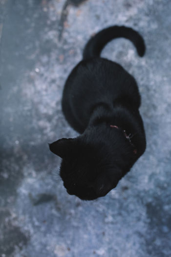 High angle view of black cat