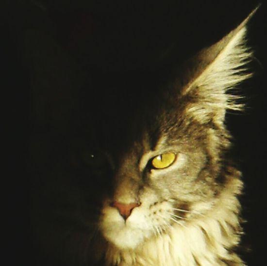 Darkness And Light Gixy Falcor Gixy