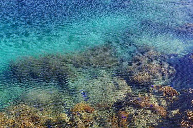 Coral Coast Coralreef Tide Pool Coral Reef Fish Water Ripples Ripples In The Water Sea Blue Nature Beauty In Nature Pattern Textured  High Angle View Outdoors Day Live For The Story