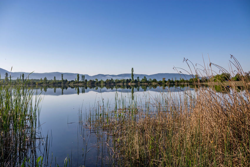 Beauty In Nature Blue Clear Sky Copy Space Day Grass Growth Lake Landscape Nature No People Non-urban Scene Outdoors Plant Reflection Scenics - Nature Sky Timothy Grass Tranquil Scene Tranquility Water