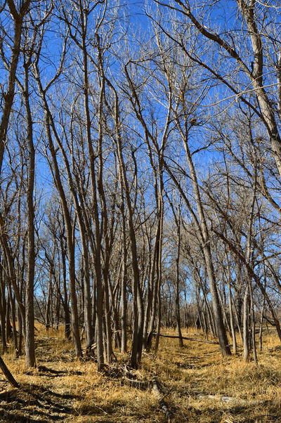 Two trails Bare Tree Beauty In Nature Branch Clear Sky Day Landscape Nature Outdoors South Of Lingle Wyoming