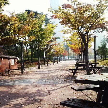 가을 Autumn 낙엽 Fall