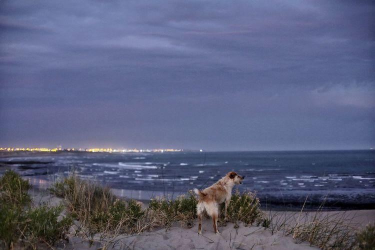 dog Pets Sea Beach Dog Water Sand Sky Animal Themes Horizon Over Water Scenics