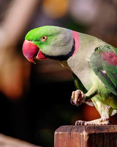 Birds Of EyeEm  Birds_collection Bird Photography Bird Parrot Animal Themes Animal Animal Wildlife Vertebrate Close-up
