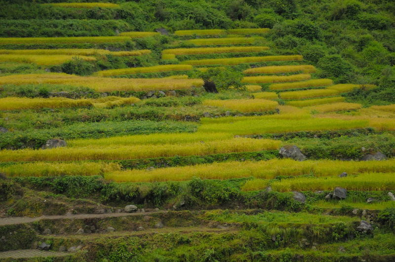 Himalayan Road Himalayan Range Agriculture Day Farm Field Food Greenery Growth Horticulture Landscape Mountain Nature No People Outdoors Plant Rice Paddy Step Farming Terraced Field Travel
