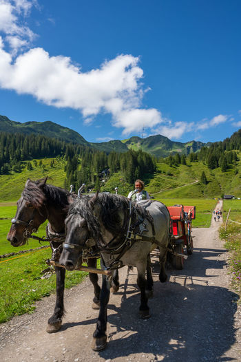 View of horse cart on road