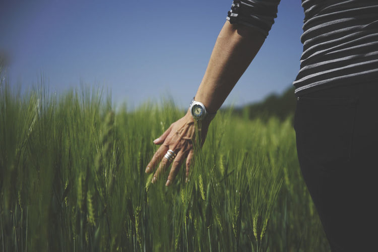 Midsection Of Woman Touching Wheat Growing On Farm