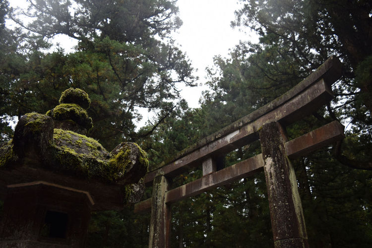 Buddhist Buddhist Gate Buddhist Temple Gate Humid Japan Nature Japan Tradition Low Angle View Nature Nature Nikko Outdoors Rain Rain Day Temple Gate Tree