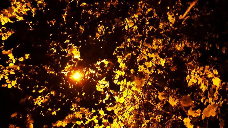 Burning Yellow Close-up Sky