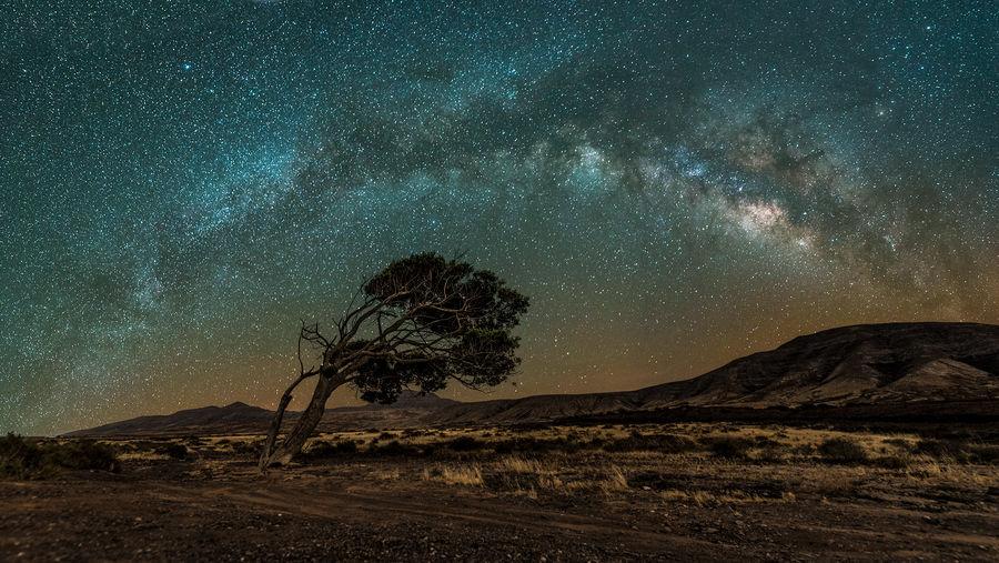 the thinking tree Galaxy Nightphotography Nikon Tree Long Exposure Lonley Milky Way Night