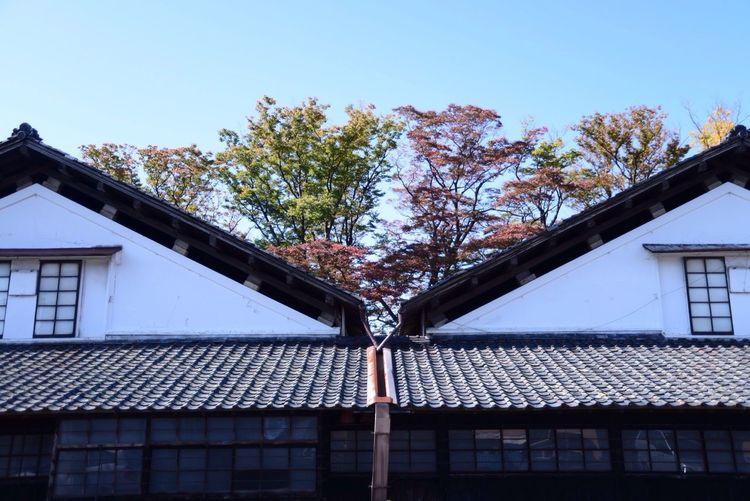 Autumn Colors SAKATA YAMAGATA Photo