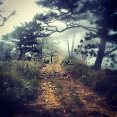 The never ending trail to Mount Tapulao