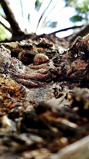 Tree Bark Micro