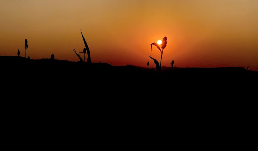 Silhouette plants on land against sky during sunset