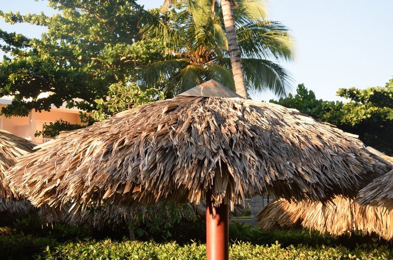 Tropical Umbrella for sunshade Roof Thatched Roof Tropical Climate Rural Scene Plant Palm Tree Palm Growth Sunshade Nature