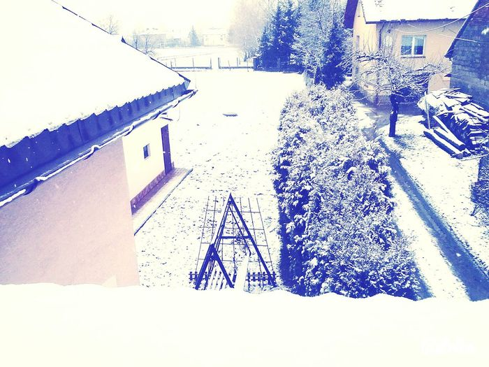 Winter Trees Snow ❄ ALL WHITE EVERYTHING <3. Beautiful Nature