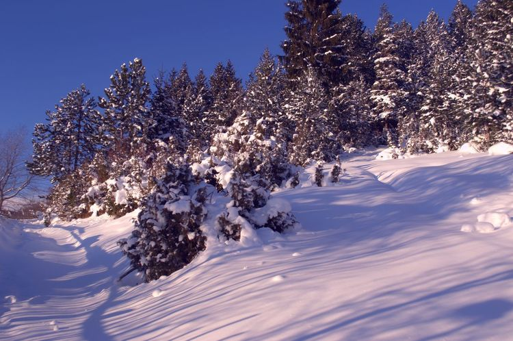 Beautiful winter landscape under the blue sky. Beauty In Nature Cold Temperature Day Landscape Nature No People Outdoors Scenics Snow Tree Winter