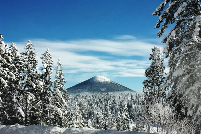Mt. Hood Snow Mountain Landscape Tree Scenics Nature Mountain Peak Beauty In Nature Outdoors Travel Wanderlust Oregon PNWonderland Pnwdiscovered PNW Oregonexplored