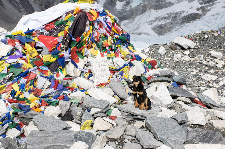 This puppy walked with me most of the way from Gorak Shep to EBC Connected By Travel EBC Everest Region Wanderlust Nature No People Outdoors Pets Sitting Togetherness