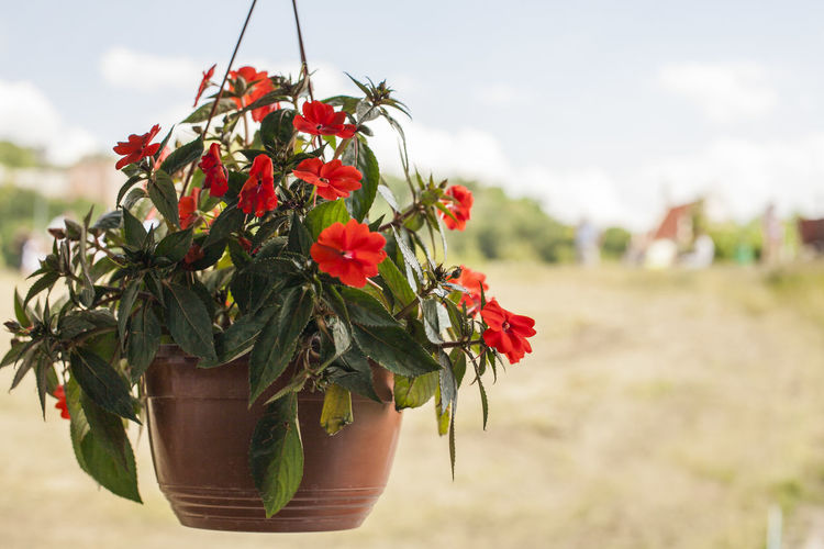 Close-up of red flower pot against sky