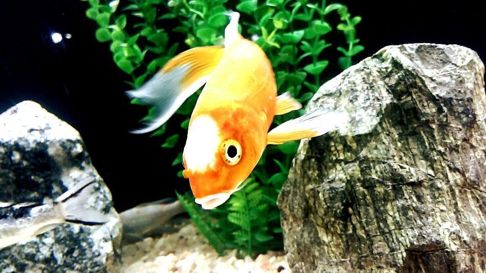 Delicious ♡ FishEyeEm Beautiful Aquarium !!!!😉😉 !!!♥♥ !!!!!!