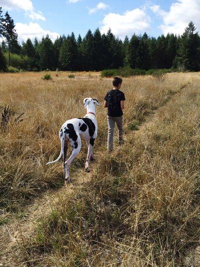 Mammal Pets Animal Themes Domestic Domestic Animals One Animal Canine
