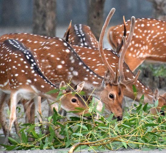 Animal Themes Close-up Plant Deer Horned Herbivorous Antelope Hoofed Mammal Antler