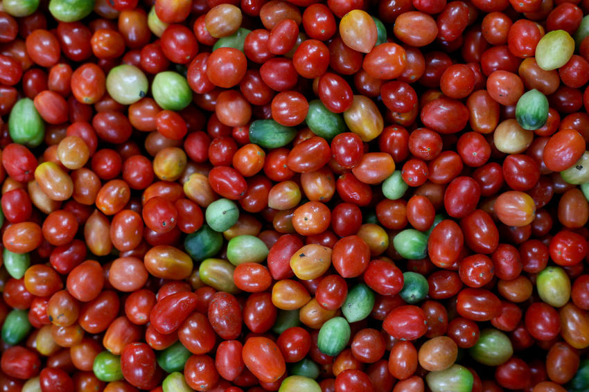 San Marzano Tomato Tomato Tomatoes Tomatoes🍅🍅 Tomato Sauce Tomato Fruit Tomato Plant Food And Drink Food Healthy Eating Fruit Freshness Red Large Group Of Objects Abundance Full Frame Backgrounds No People Wellbeing Close-up Nature Vegetable Ripe Outdoors Business Organic