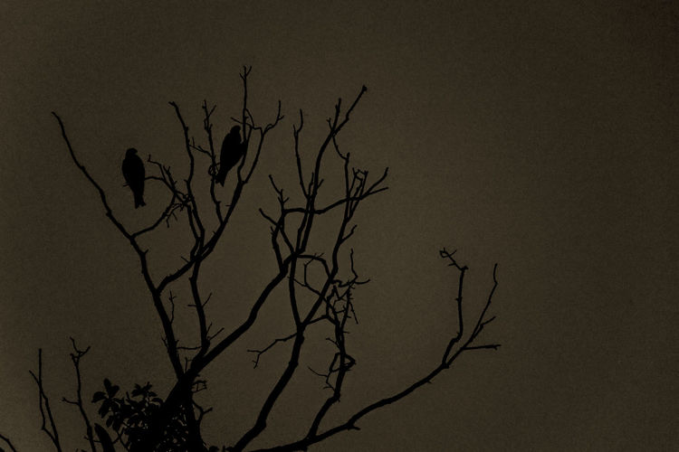 No People Eagle Eagle - Bird Eaglephotography Branches And Sky Grainy Photo Black And White Outdoors B&w Street Photography Canon80d Canon Eos  Canon18-135 Bird Photography Worldphotographyday EyeEm Gallery