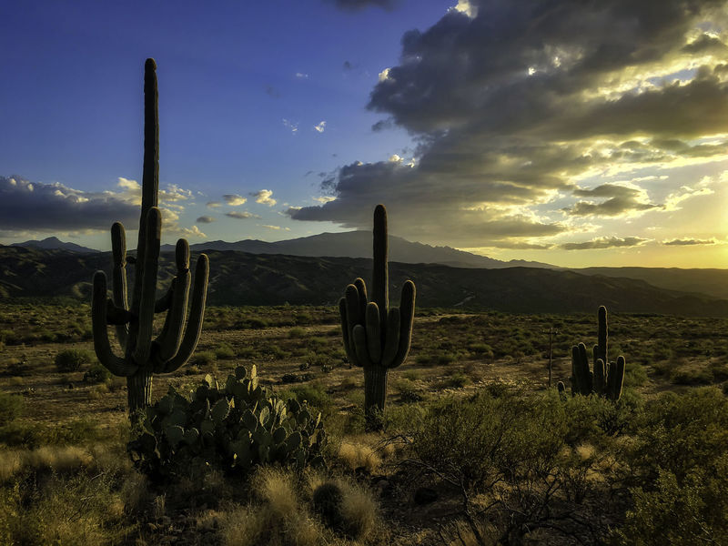 Three saguaro in the Sonoran desert, near Cascabel, Arizona Arizona Desert Arid Climate Beauty In Nature Cactus Cloud - Sky Environment Growth Idyllic Landscape Mountain Nature No People Non-urban Scene Outdoors Public Land Saguaro Cactus Scenics - Nature Sky Sunset Tranquil Scene Tranquility