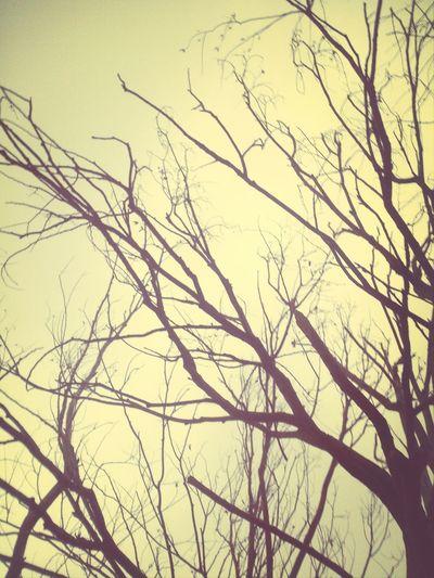 Autumn Tree Branchs Fall مپرس حال مرا روزگار یارم نیست\جهنمی شده ام،هیچ کس کنارم نیست\نهال بودم و در حسرت بهار،ولی\درخت می شوم و شوق برگ و بارم نیست.
