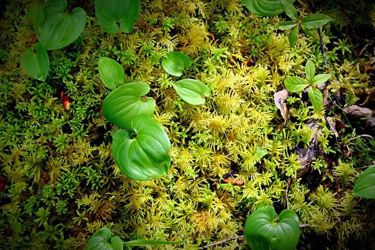 Beautiful Nature. Moss Enjoying Life Pacific Northwest  Washington State EyeEm Nature Lover Nature Lemon Lime By Motorola The Great Outdoors - 2015 EyeEm Awards